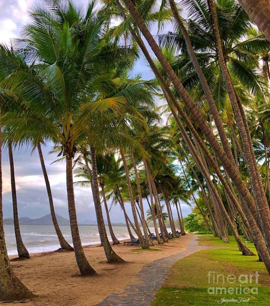 Photograph - Palm Cove by Jacqueline Faust