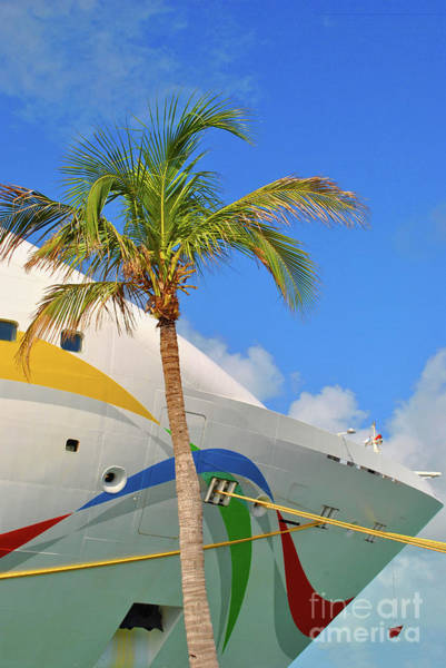 Photograph - Palm Cruise by Jost Houk