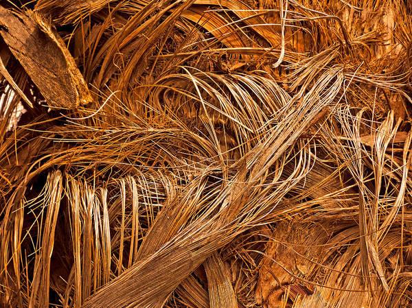 Photograph - Palm Effusion In Winter by Lynda Lehmann