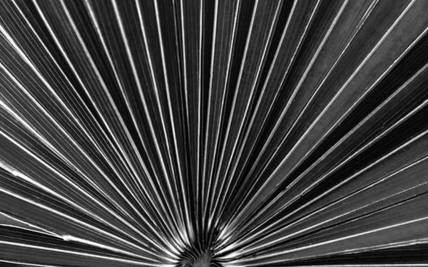 Photograph - Palm Fan by Robert Mitchell