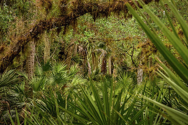 Photograph - Palm Forest by Robert Mitchell