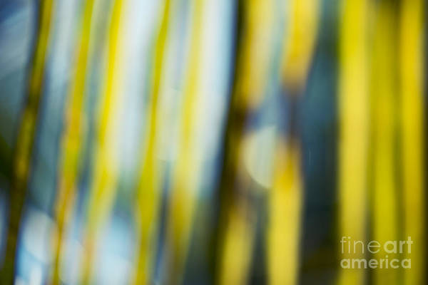 Photograph - Palm Frond Abstract Jewel Tones by Sharon Mau