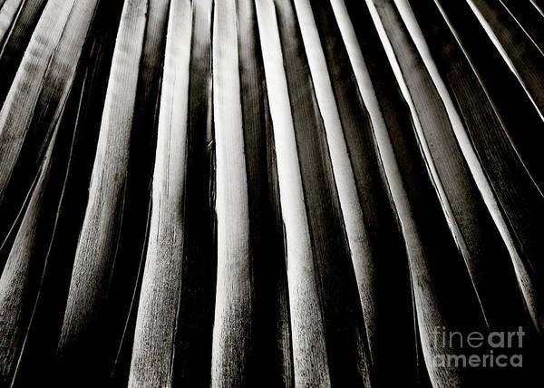 Photograph - Palm Frond by Charmian Vistaunet
