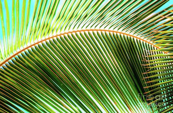 Photograph - Palm Frond Sway by D Davila