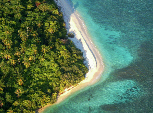 Photograph - Palm Island In The Ocean by Jenny Rainbow