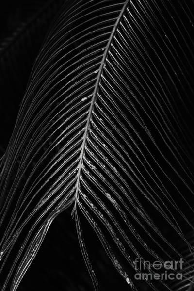 Photograph - Palm Leaf by Deborah Benoit