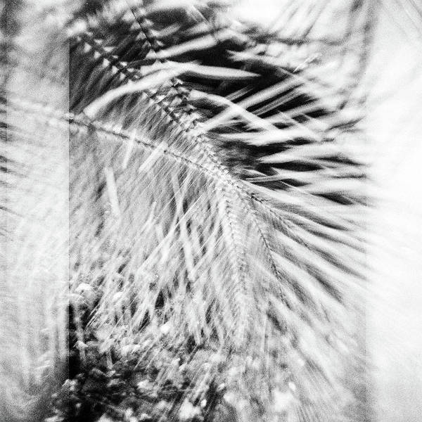 Wall Art - Photograph - Palm Leaf India 2 by Rika Maja Duevel