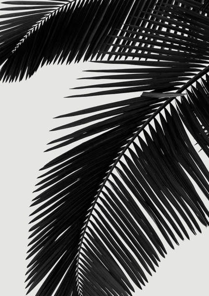 Wall Art - Digital Art - Palm Leaves Bw by Rafael Farias