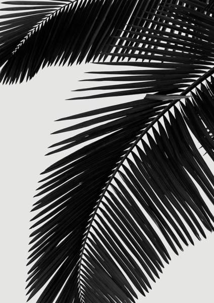 Palm Trees Digital Art - Palm Leaves Bw by Rafael Farias