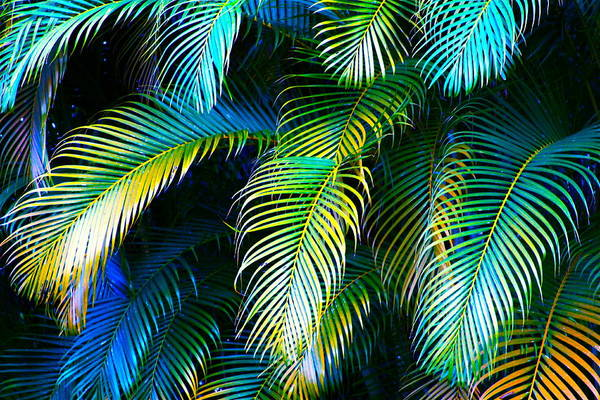 Tropical Photograph - Palm Leaves In Blue by Karon Melillo DeVega
