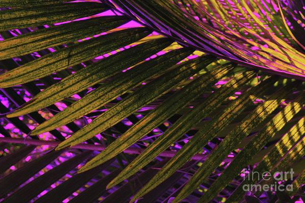 Photograph - Palm Leaves In Supernatural Light by Marina Usmanskaya