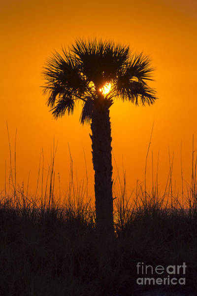 Wall Art - Photograph - Palm Light by Marvin Spates