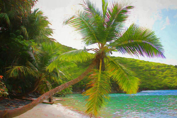 Photograph - Palm On The Beach by Alice Gipson