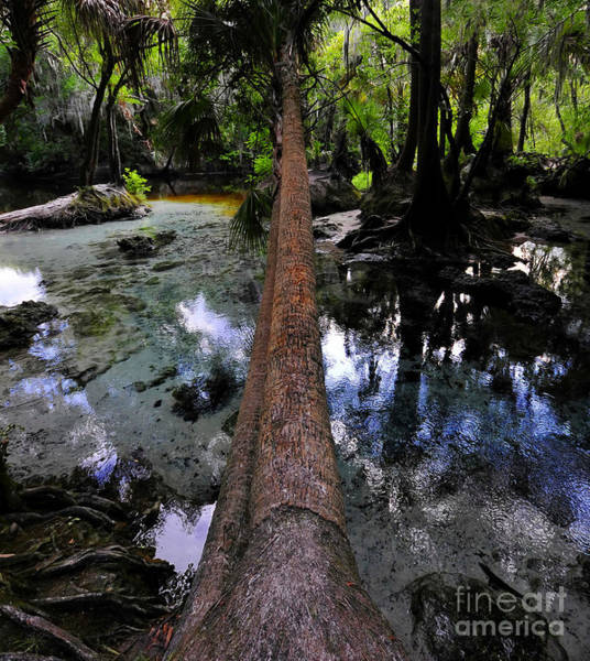 Thompson River Photograph - Palm Over Spring by David Lee Thompson