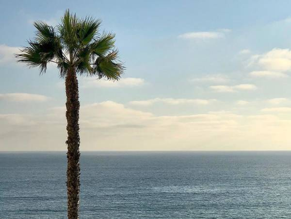 Photograph - Palm Over The Sea by Brian Eberly