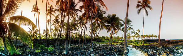 Coconut Trees Photograph - Palm Pathway by Sean Davey