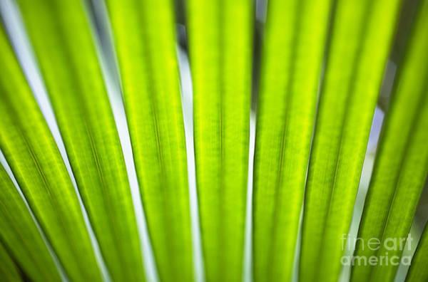 Palm Patterns Macro Art Print