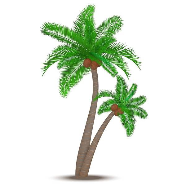 Cultivation Digital Art - Palm by Paul Damiano