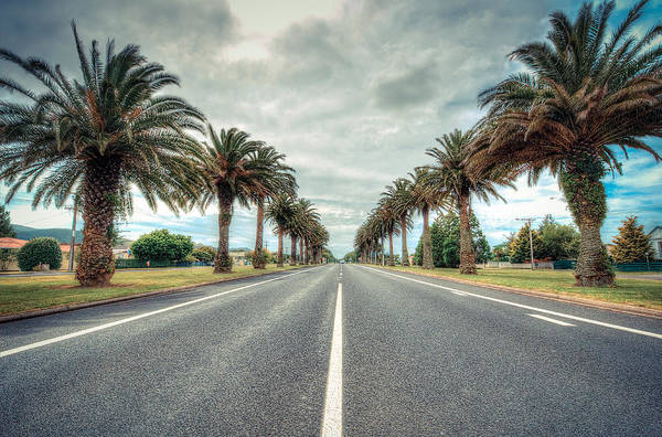Wall Art - Photograph - Palm Road by Les Lorek
