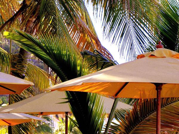 St. Maarten Photograph - Palm Serenity by Karen Wiles