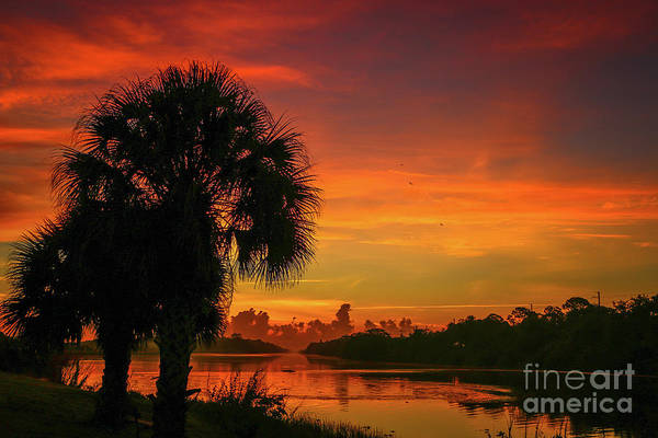 Art Print featuring the photograph Palm Silhouette Sunrise by Tom Claud