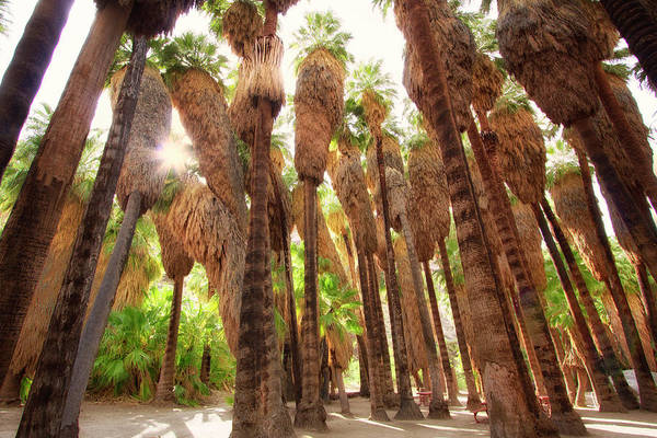 Wall Art - Photograph - Palm Spring Vibes by Nicki Frates