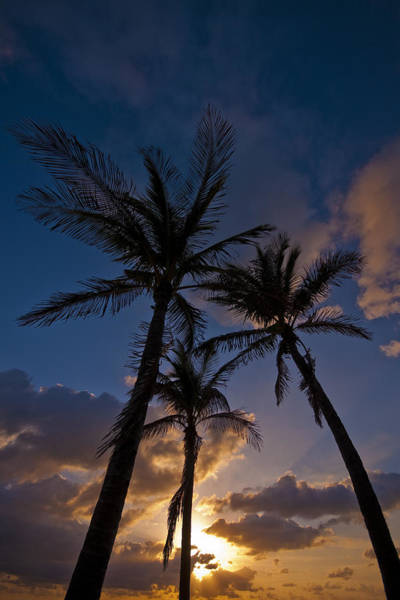 Palm Sunrise Art Print