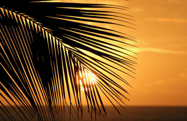 Photograph - Palm Sunset by Vicki Hone Smith