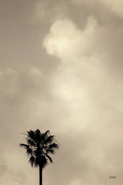Photograph - Palm Tree And Clouds Toned by David Gordon
