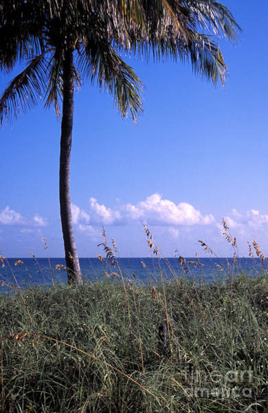 Photograph - Palm Tree And Sea Grass On The Water Under Blue Sky by William Kuta