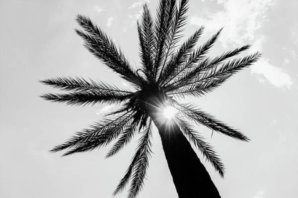 Photograph - Palm Tree And Sunbeams by Andrea Mazzocchetti