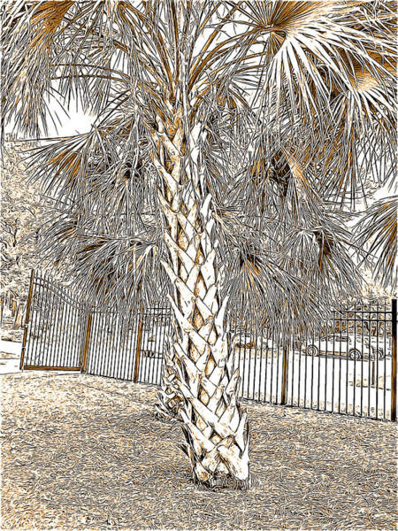 Palm Frond Digital Art - Palm Tree At The Botanical Gardens In Black And White And Sepia Tones by Marian Bell