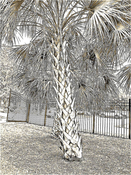 Palm Frond Digital Art - Palm Tree At The Botanical Gardens In Black And White With Mild Sepia Tones by Marian Bell