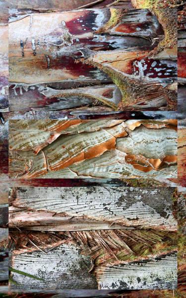 Photograph - Palm Tree Bark Design by Jessica Jenney