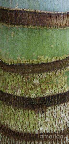 Photograph - Palm Tree Bark Texture by Charmian Vistaunet