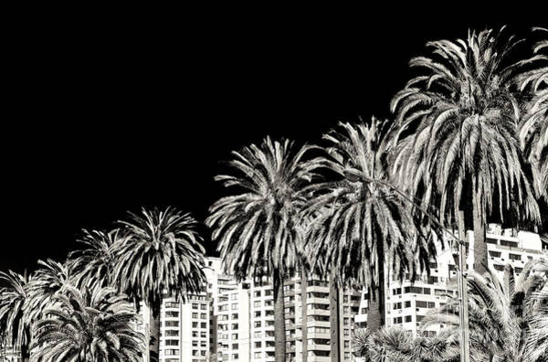 Photograph - Palm Tree Dimensions In Vina Del Mar by John Rizzuto