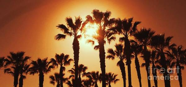 Photograph - Palm Tree Dreams by Jenny Revitz Soper
