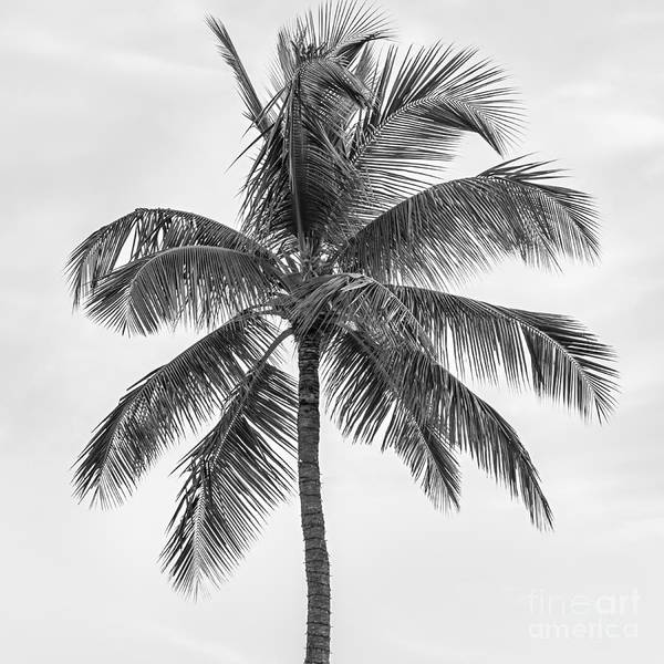 Canopy Photograph - Palm Tree by Elena Elisseeva