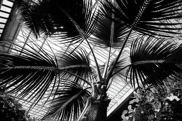 Photograph - Palm Tree Glass Ceiling Abstract by John Williams
