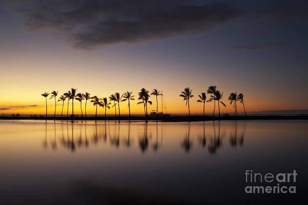 Photograph - Palm Tree Grove At Ku'uali'i Hawaiian Fishpond by Charmian Vistaunet
