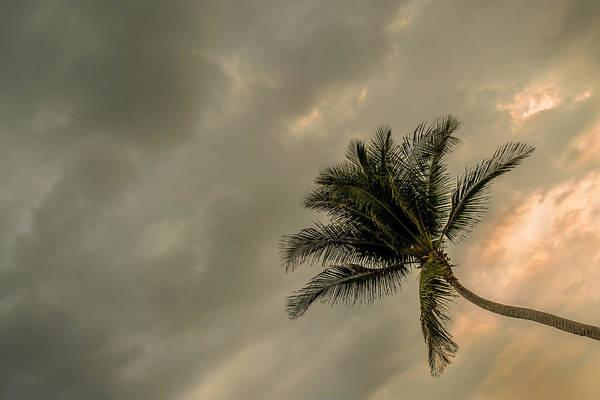 La Libertad Photograph - Palm Tree II by Totto Ponce