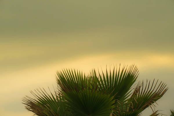 La Libertad Photograph - Palm Tree IIi by Totto Ponce