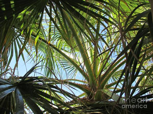 Photograph - Palm Tree In Fuengirola by Chani Demuijlder