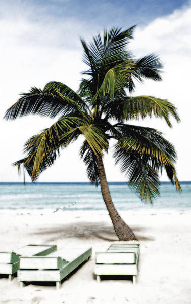 Wall Art - Painting - Palm Tree In Jamaica by Glennis Siverson