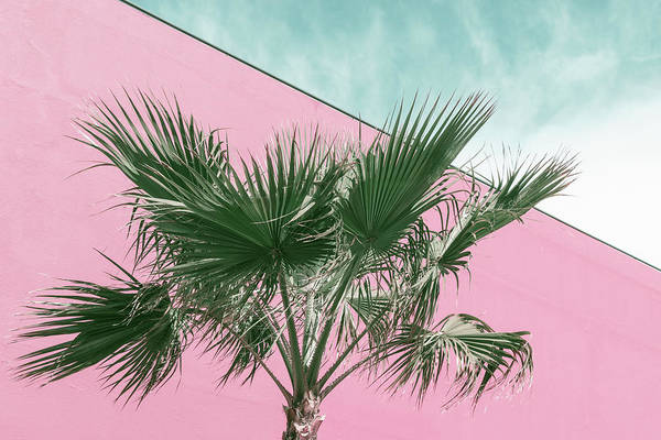 Photograph - Palm Tree In Millennial Pink And Mint Green by Georgia Mizuleva