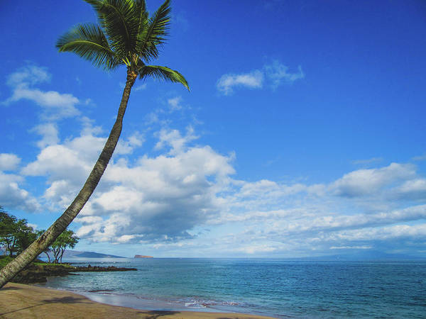 Photograph - Palm Tree In Paradise by Andy Konieczny