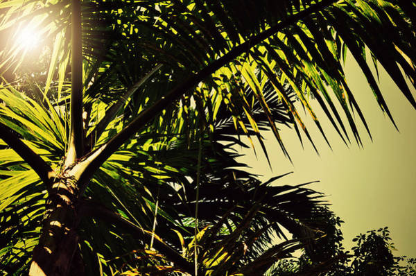 Photograph - Palm Tree In Sunny Ocho Rios Jamaica by Patricia Awapara