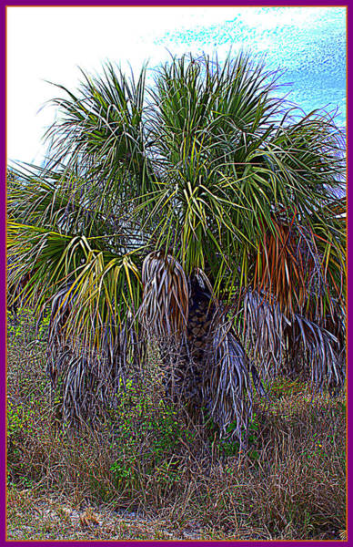 Wall Art - Photograph - Palm Tree In The Botanical Gardens Of Largo Florida by Mindy Newman