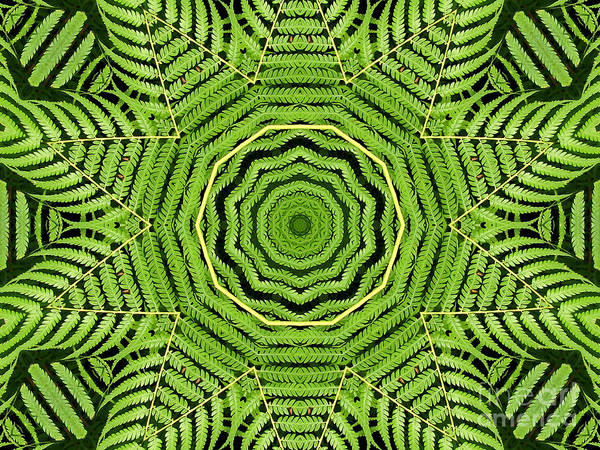 Photograph - Palm Tree Kaleidoscope Abstract by Rose Santuci-Sofranko