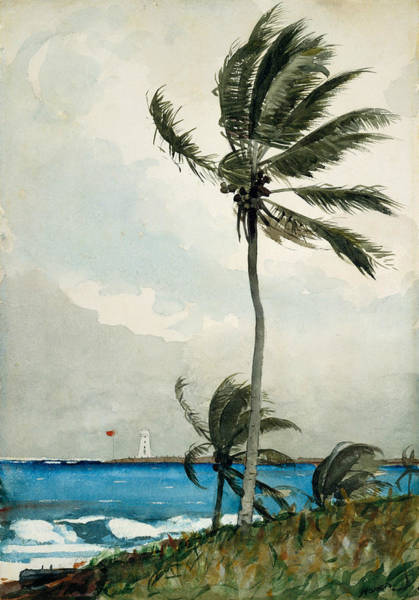 Painting - Palm Tree Nassau by Winslow Homer